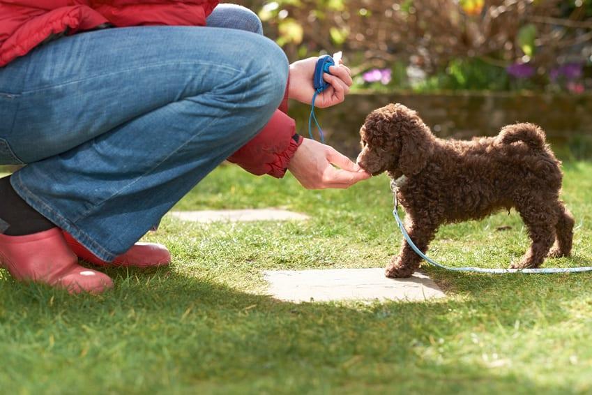 chien donne la patte