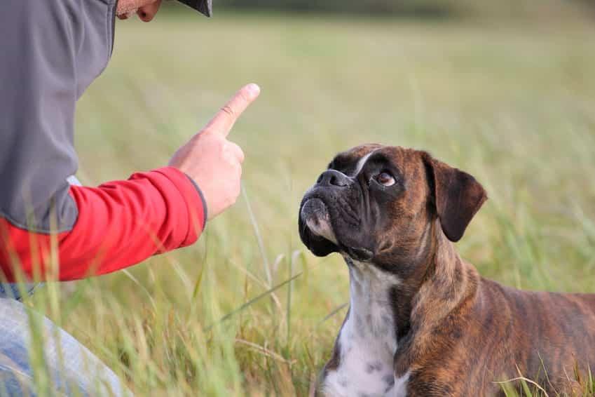 Panier De Transport Pour Petit Chien - 15 techniques à connaître - Éducateur canin - Blog chien