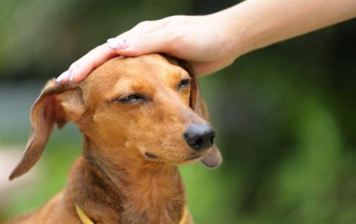 chien claque des dents