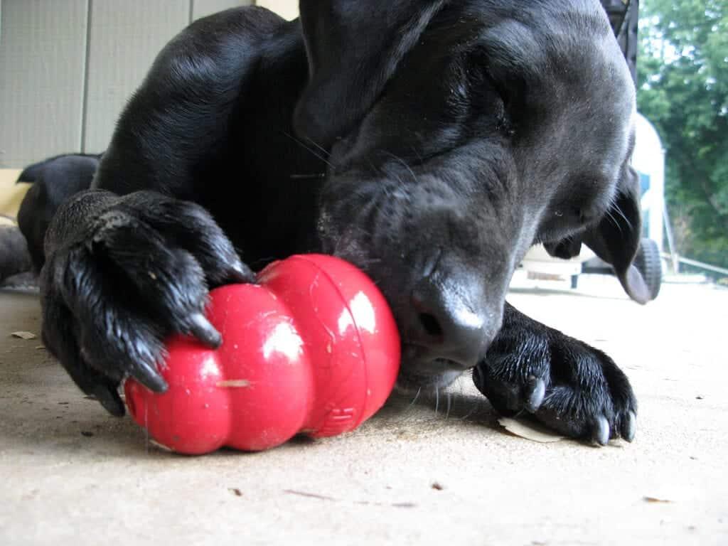 chien adore son kong