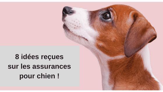 idee recue assurance chien