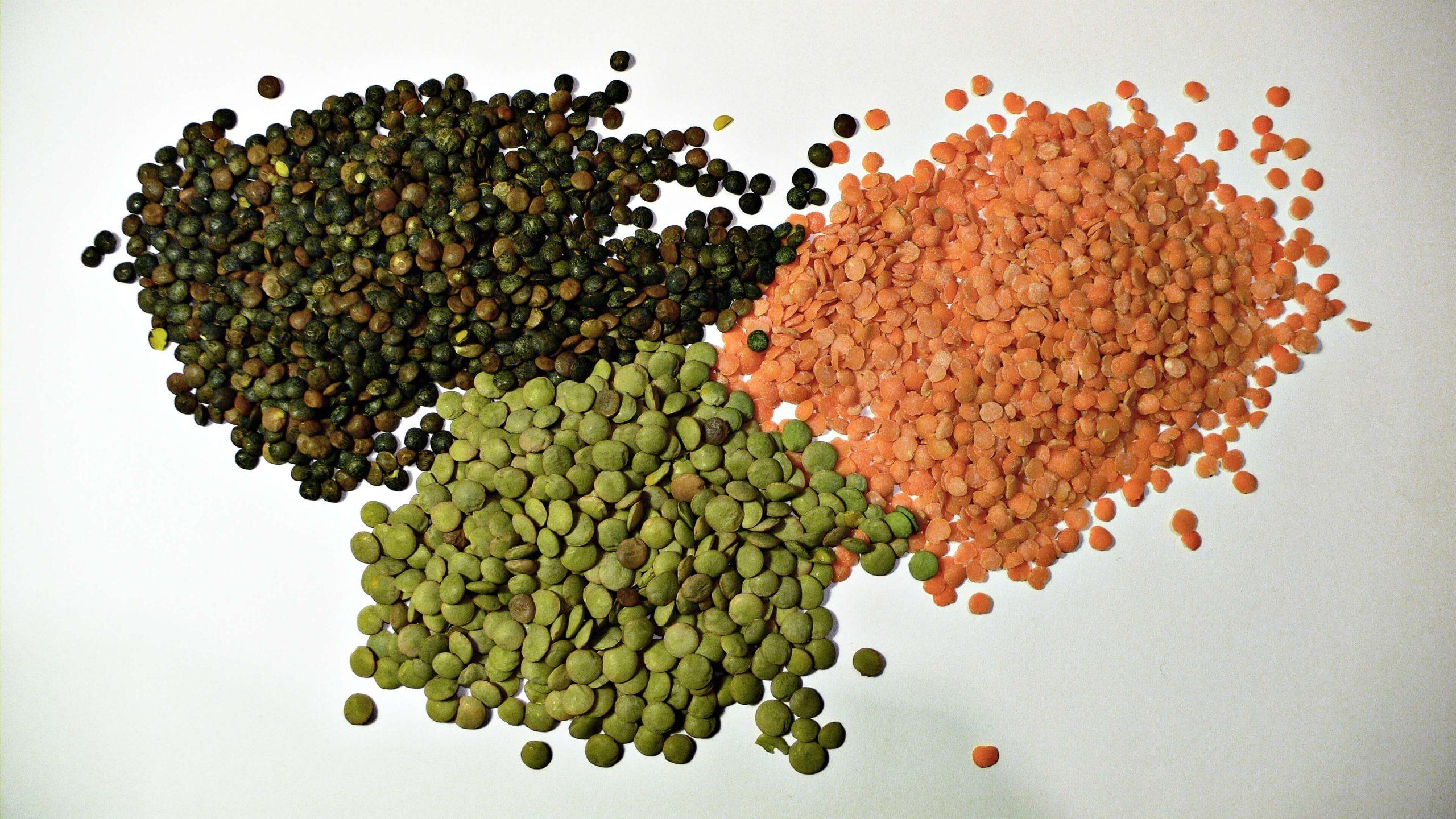 chien-mange-lentilles