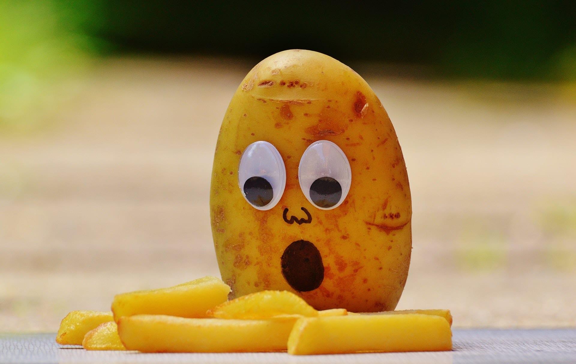 chien-mange-pomme-de-terre