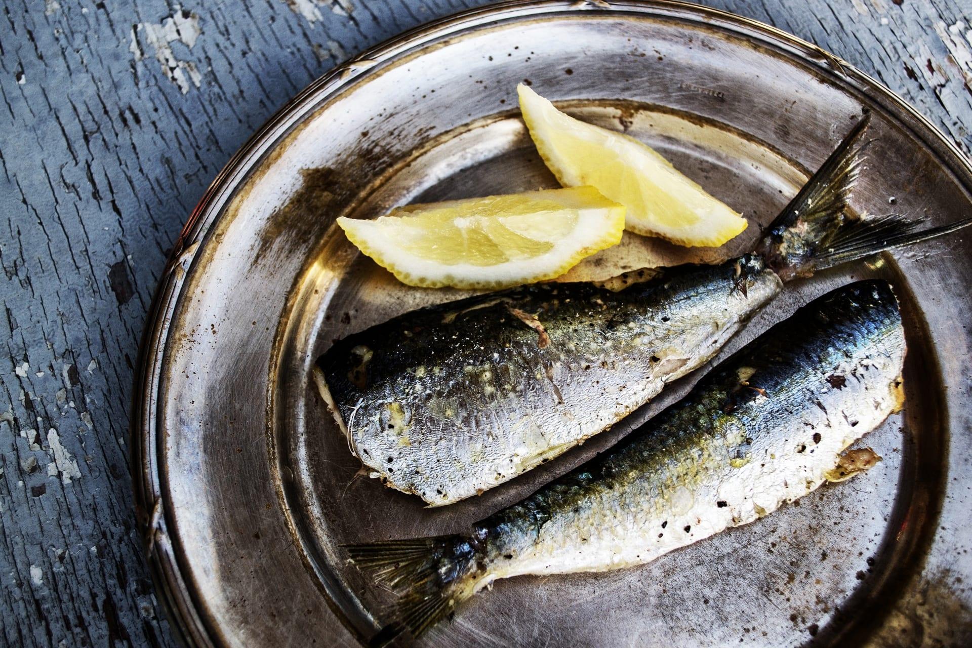 chien-mange-sardine