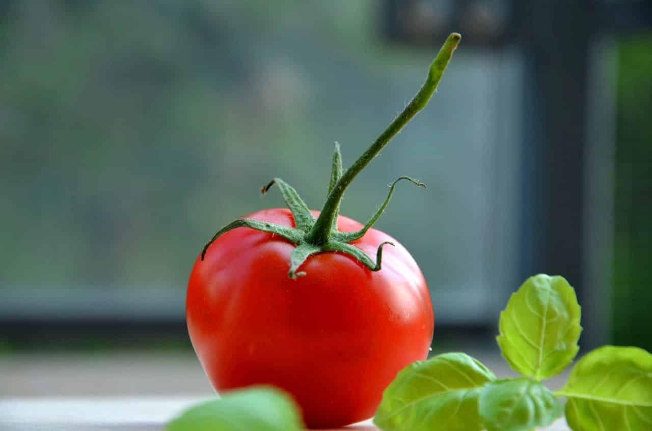 chien-mange-tomate