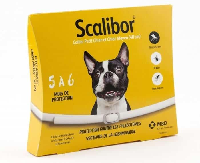 collier-scalibor-chien