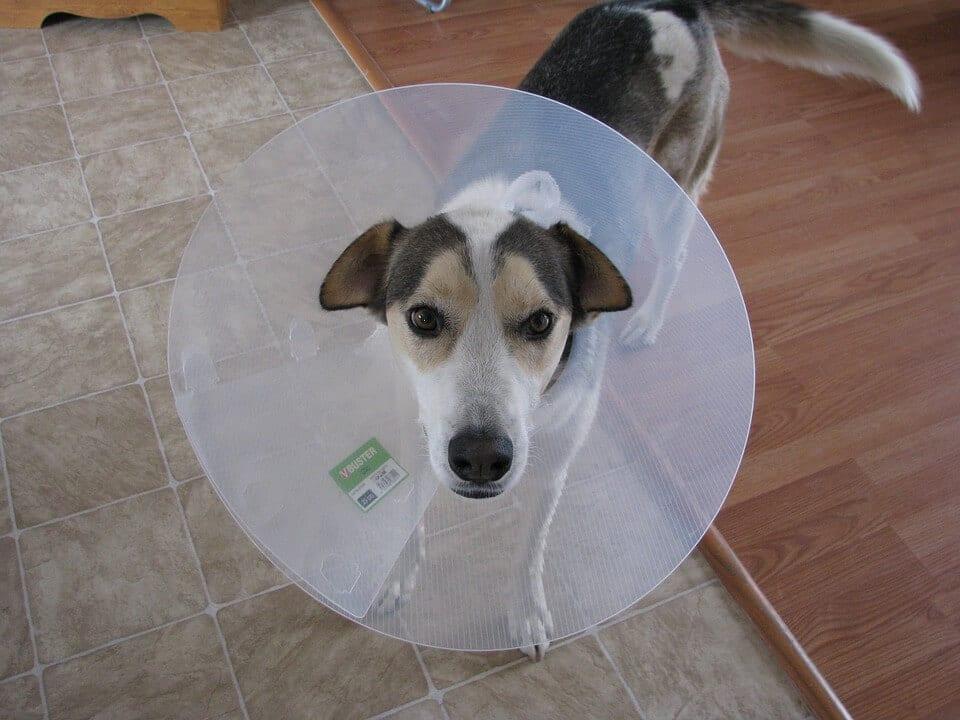 veterinaire de garde chien malade