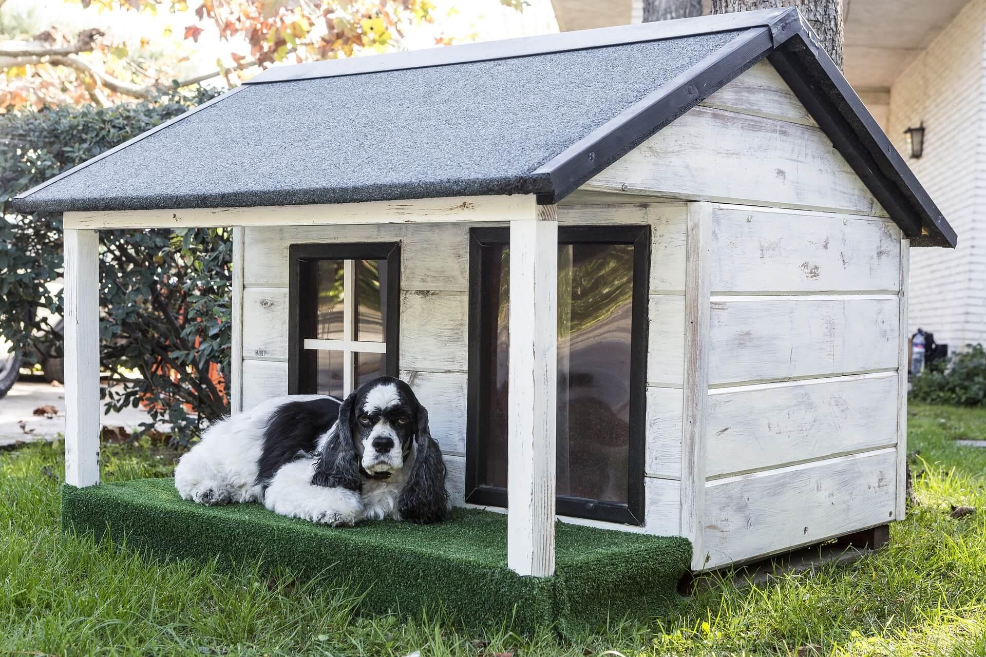 niche pour chien palette