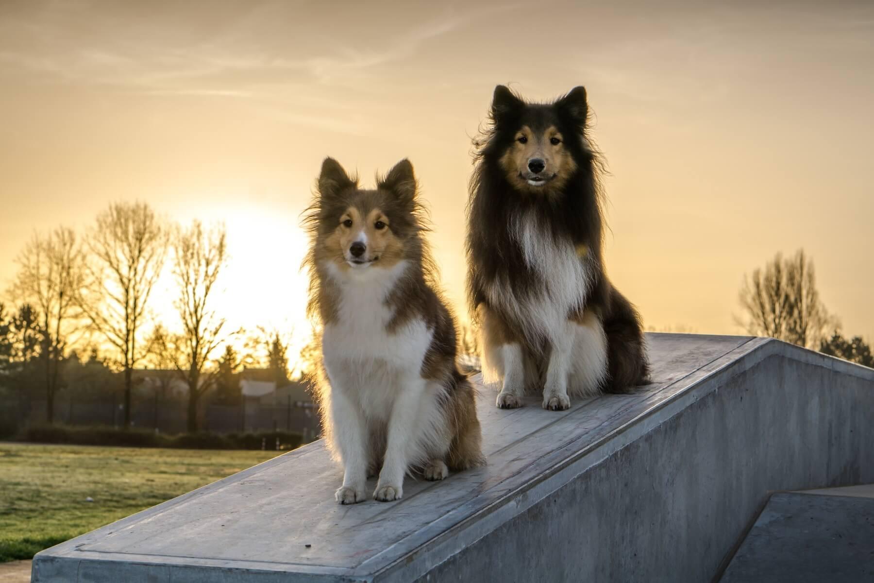 pensions pour chien
