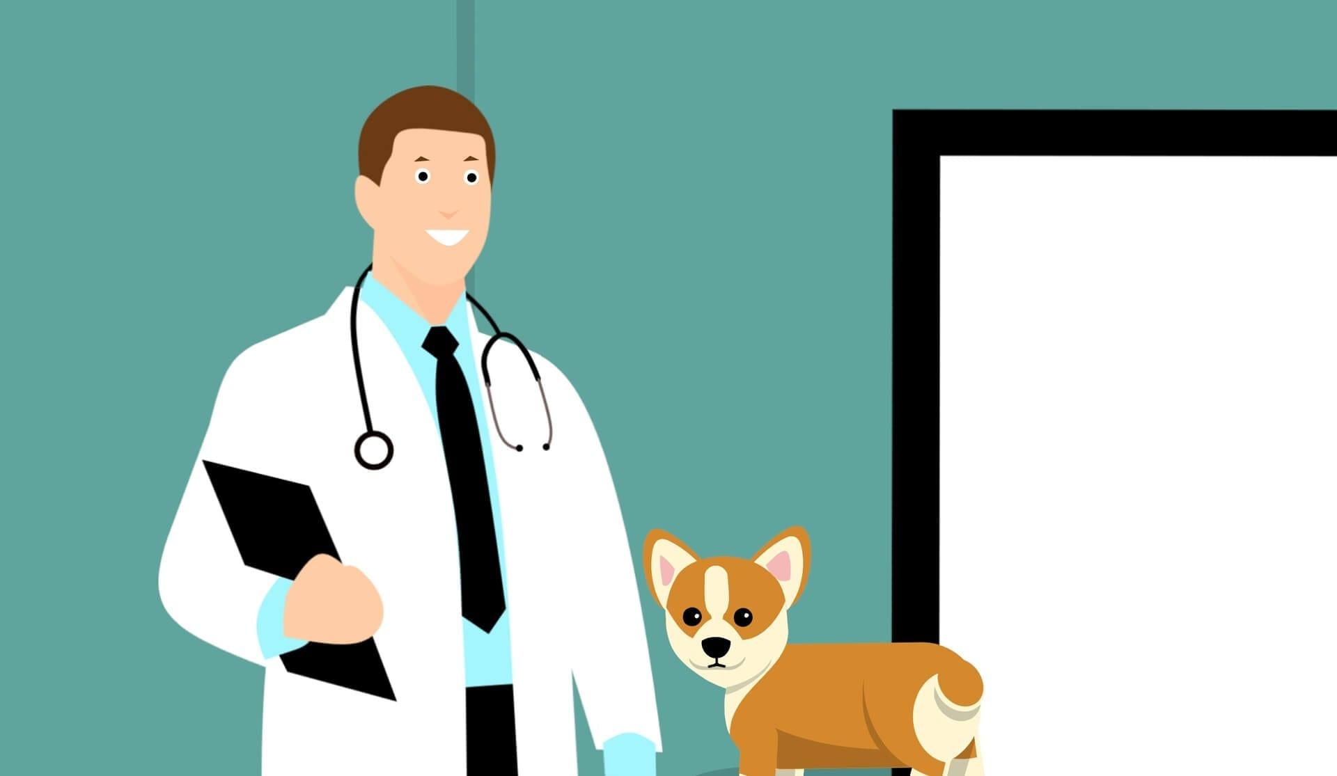 Bible des maladies du chien