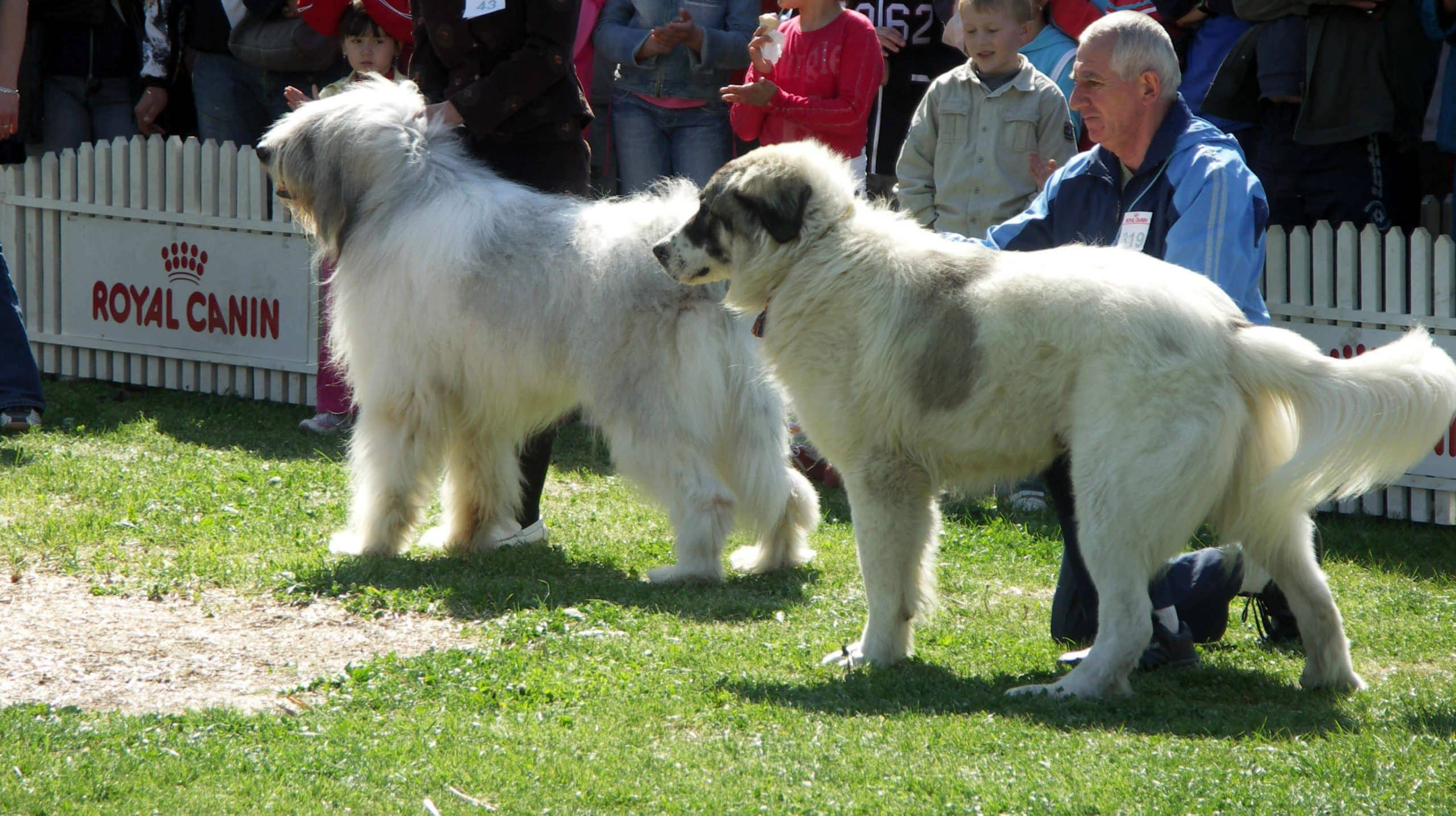 Associations canines