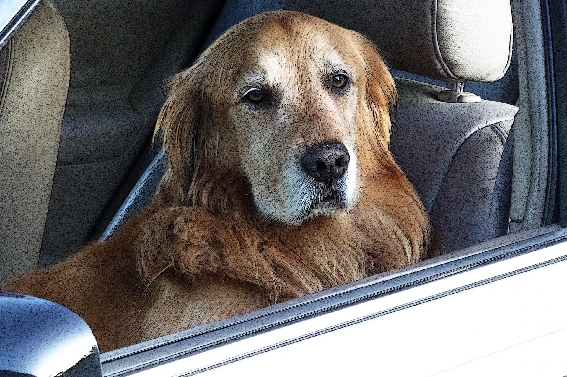 housse siege voiture chien