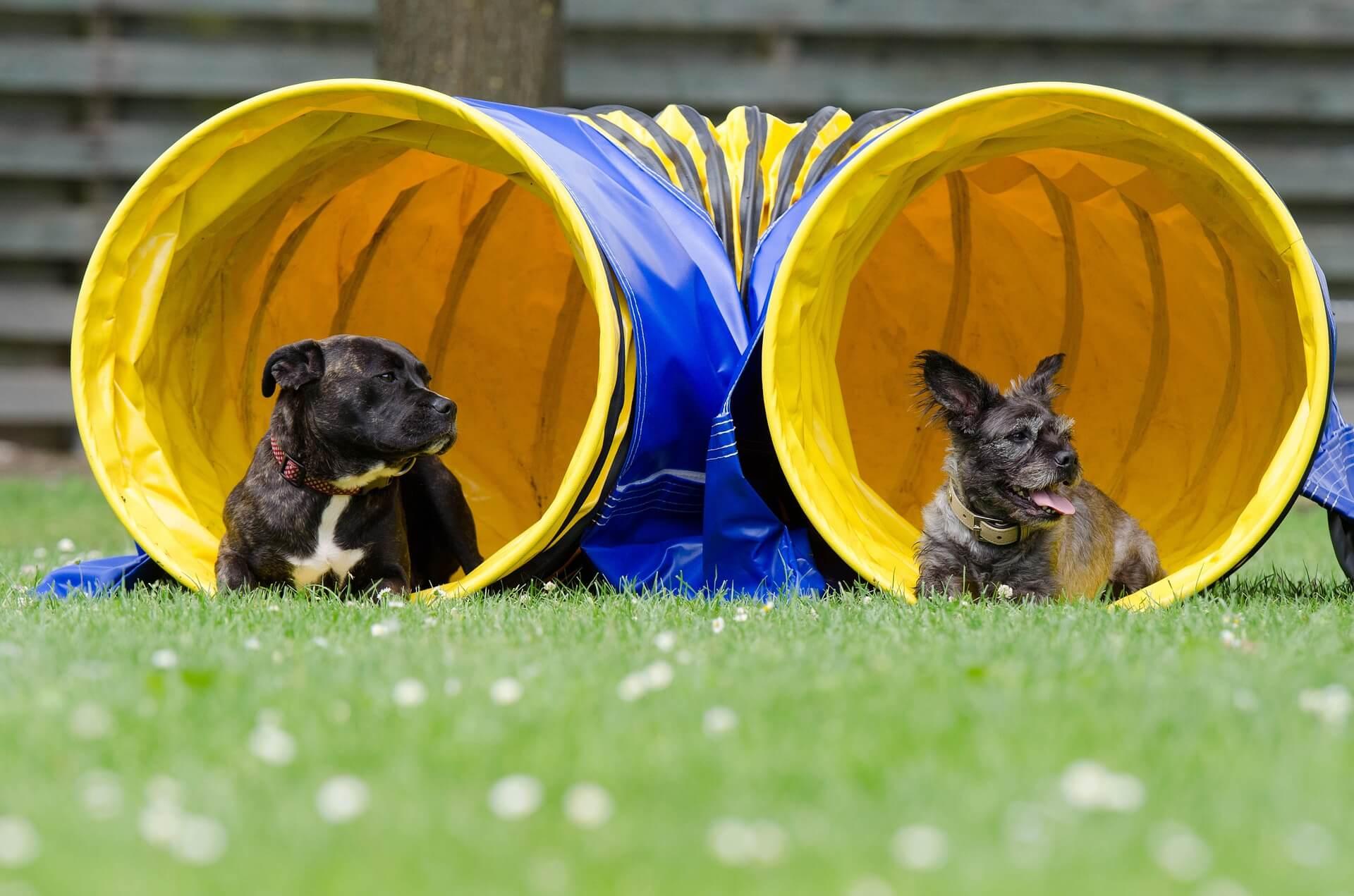 kit agility pour chien
