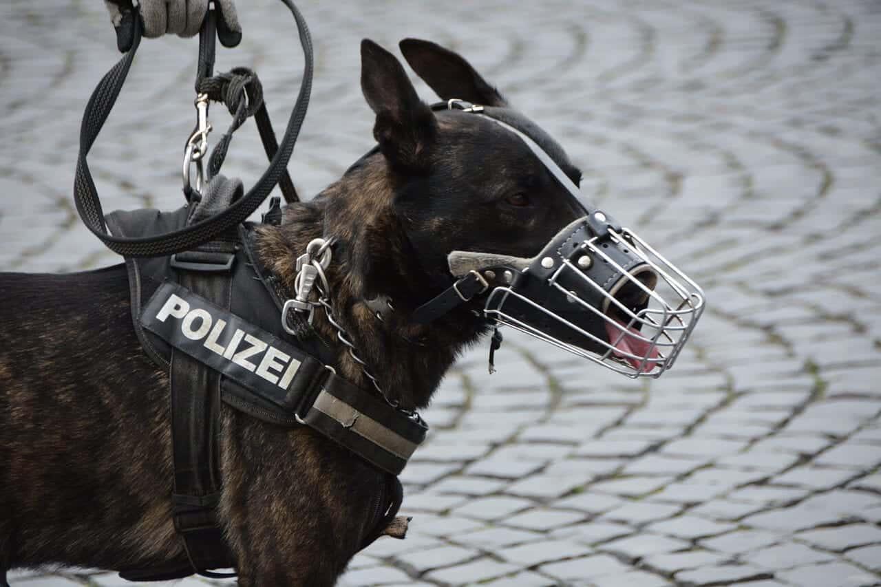 museliere chien