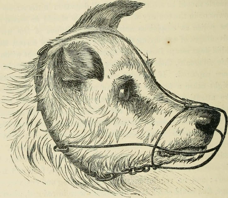 rage chien