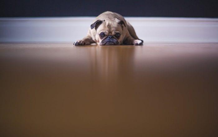 anxiété de séparation chien