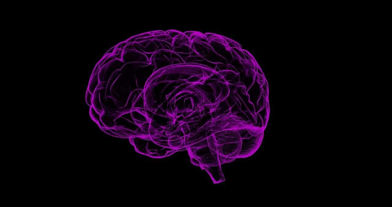 cerveau chien