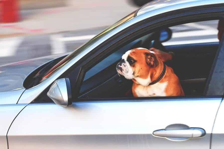 chien enfermé dans vune voiture