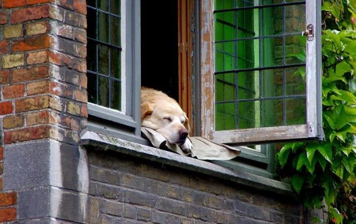 chien maison