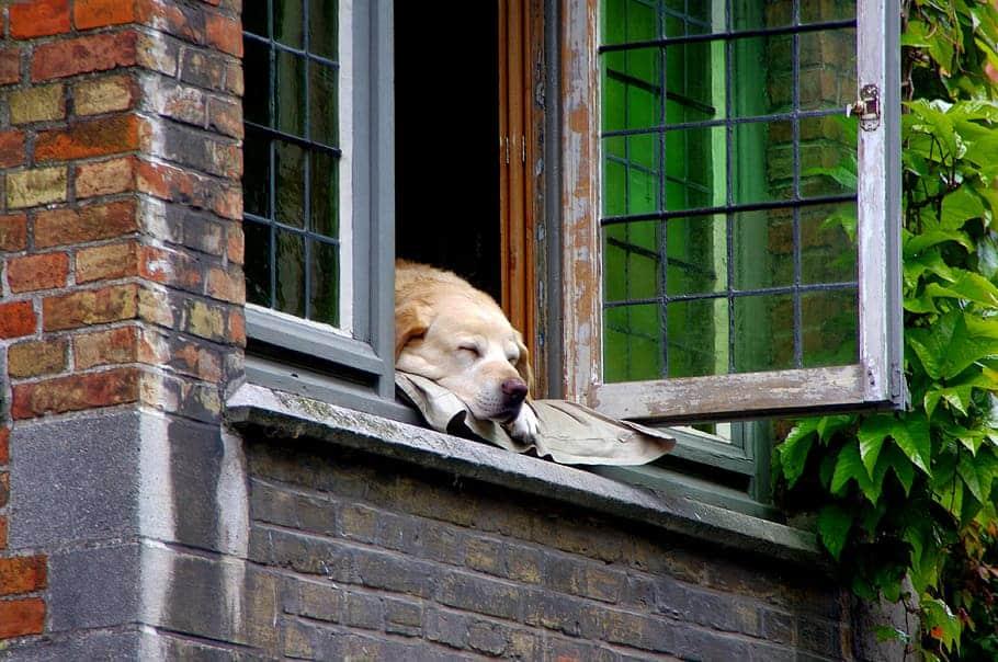 chien confinement