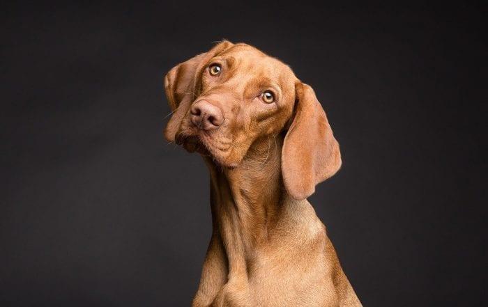 chien stérilisé