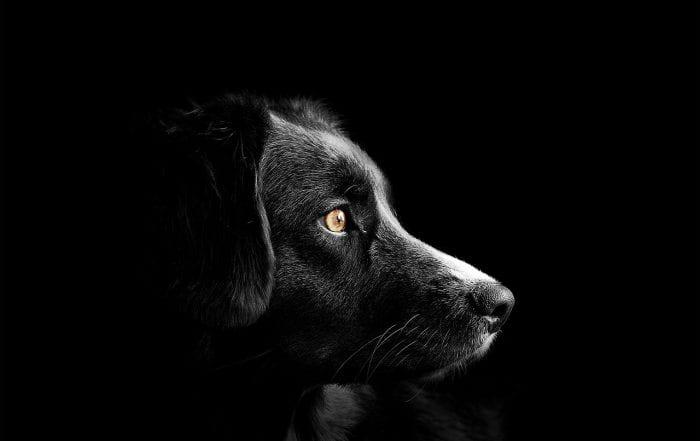 deuil chien