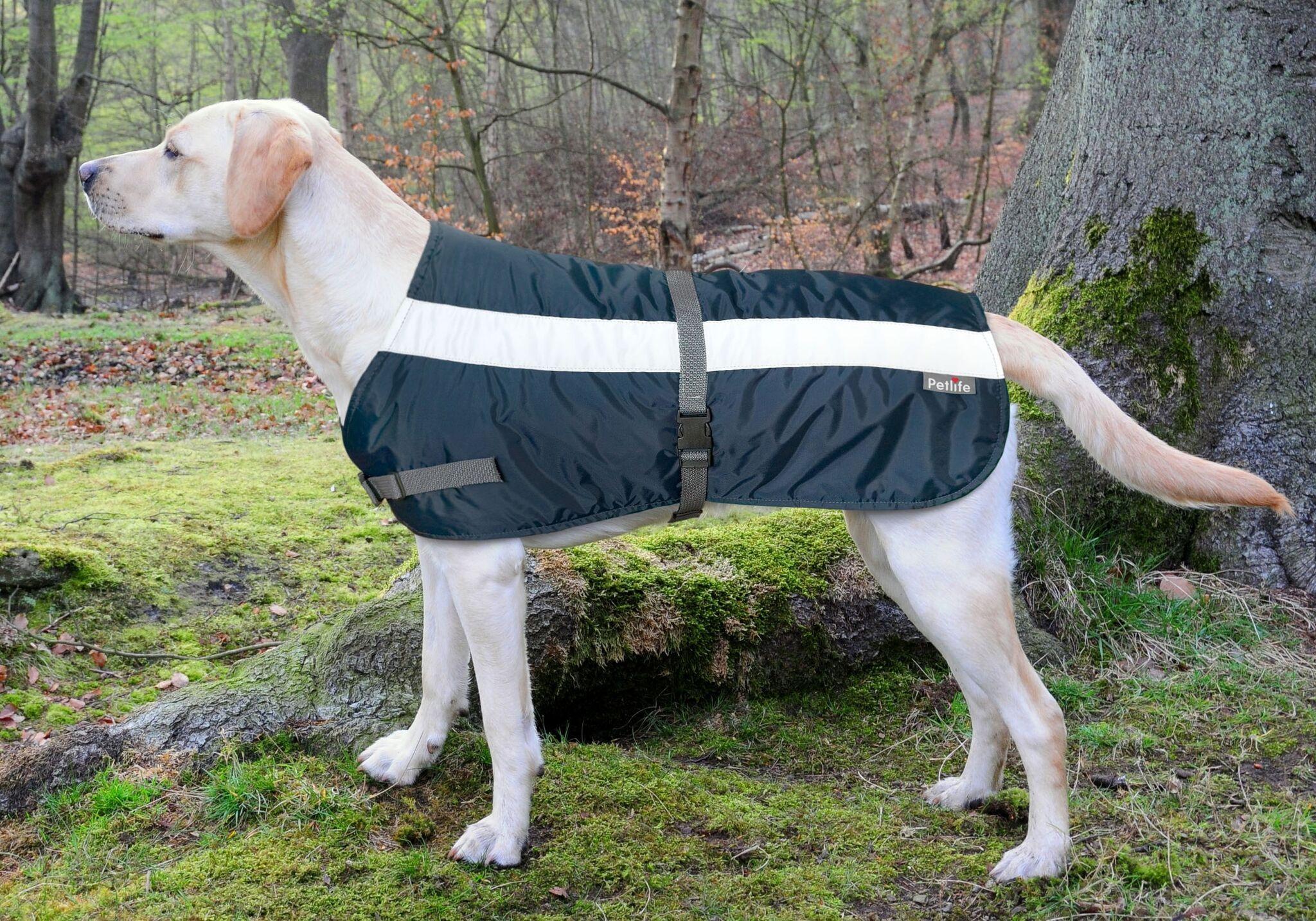 belle veste pour chien