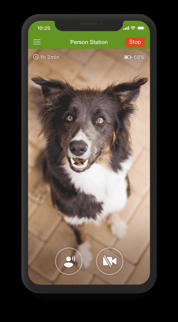 Consultation en ligne educateur canin