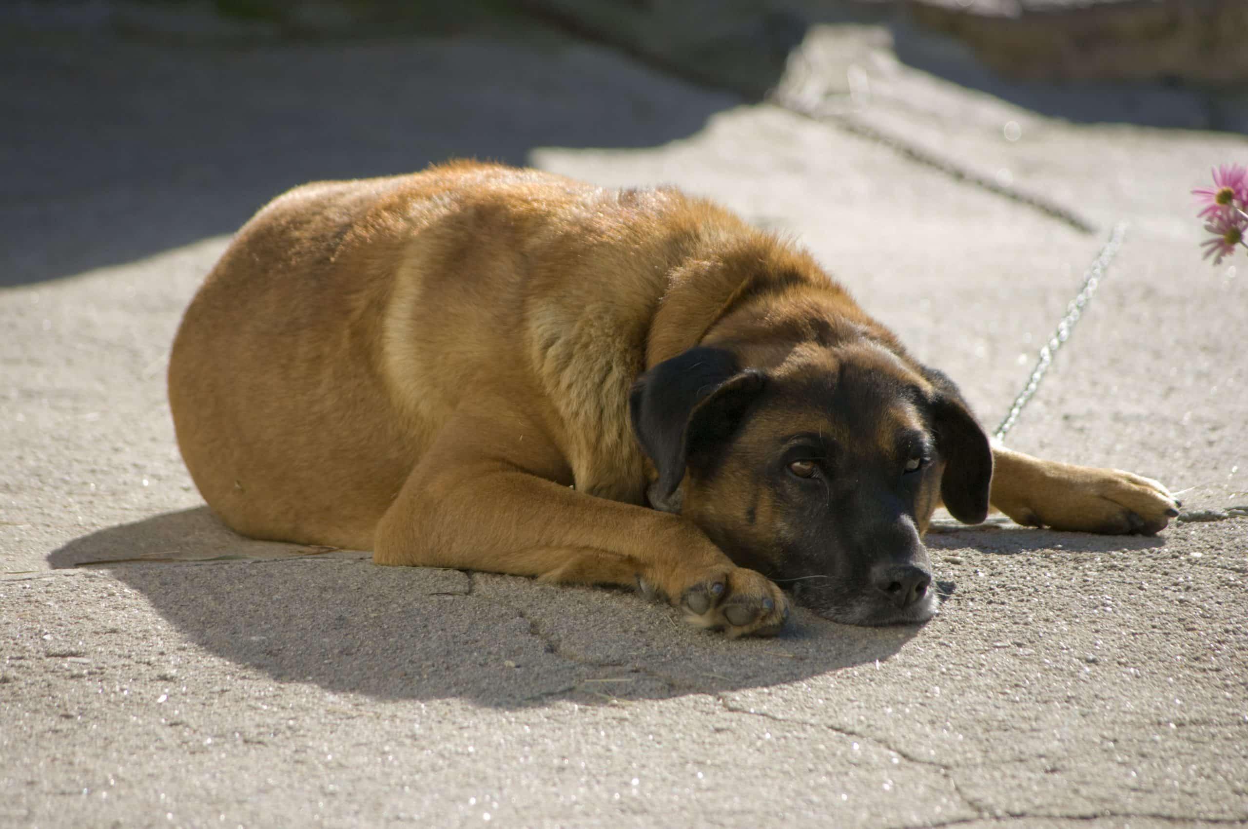 chien qui vomit et a la diarrhée