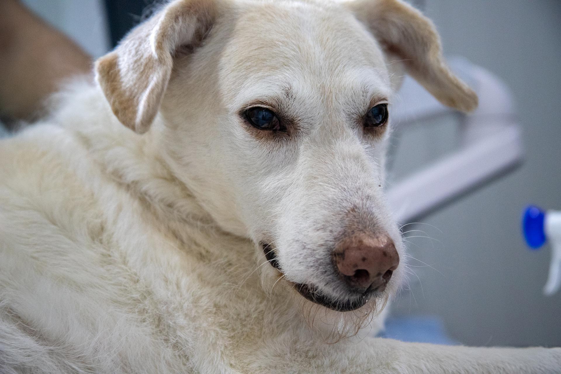 un chien qui vomit de la mousse