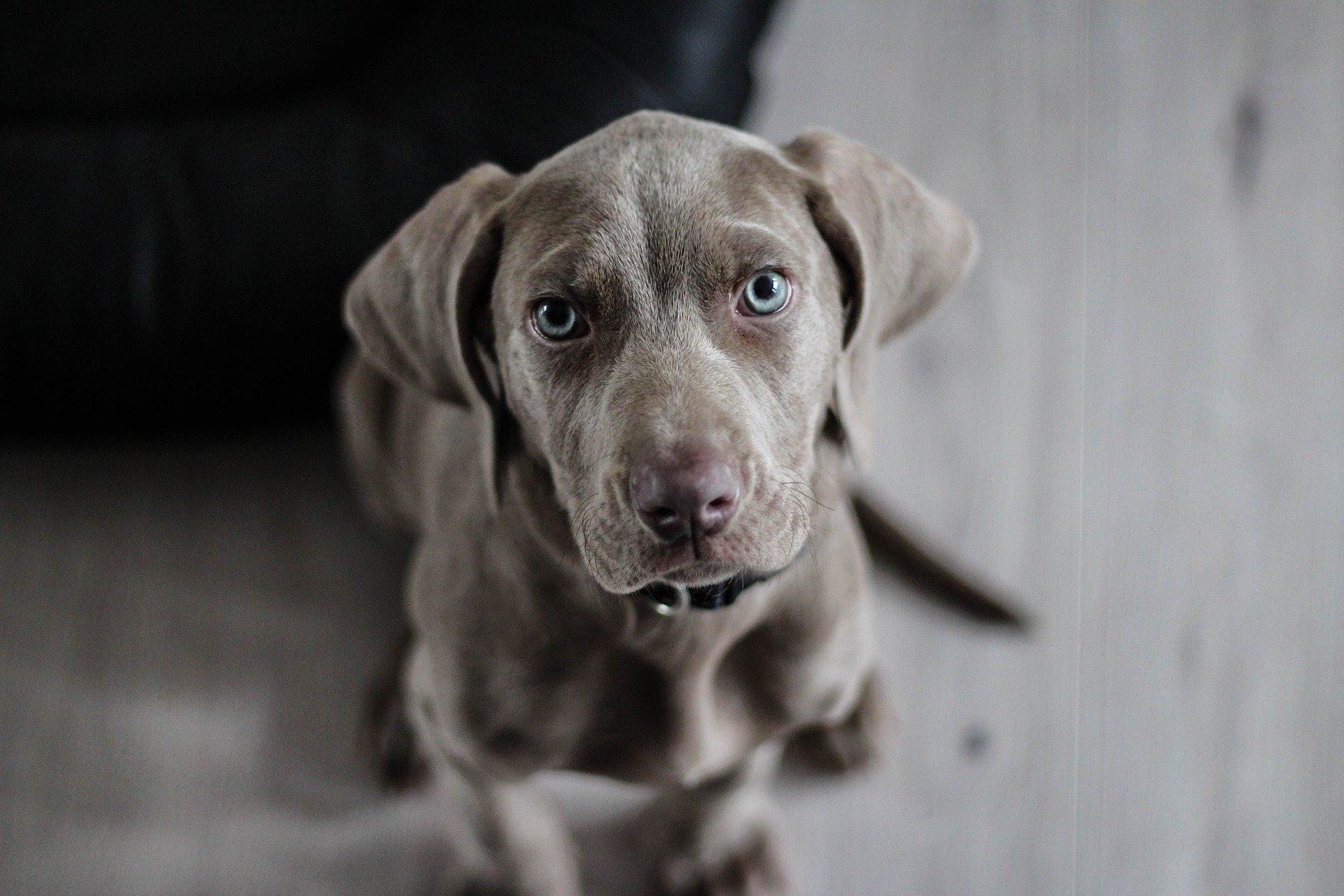 un chien qui a le typhus